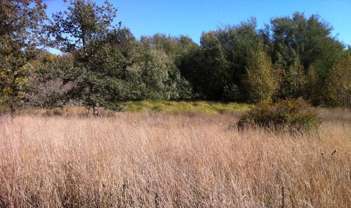 Nature setting at Ragle Ranch park Sebastopol